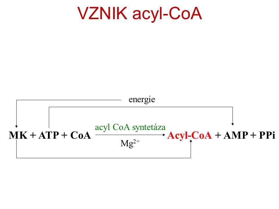 VZNIK acyl-CoA MK + ATP + CoA Acyl-CoA + AMP + PPi energie
