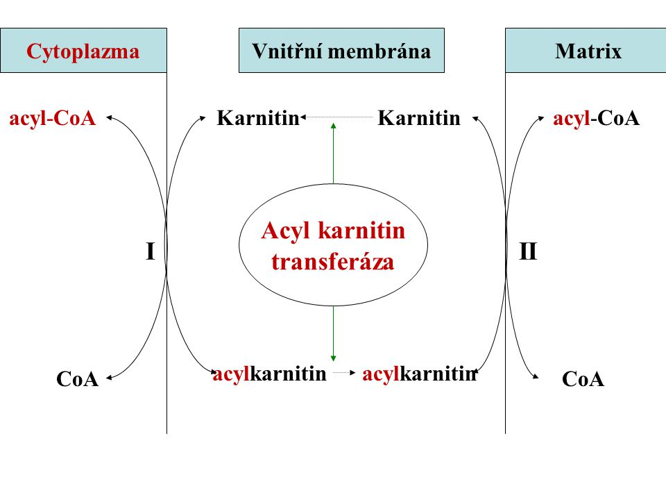 Acyl karnitin transferáza I II