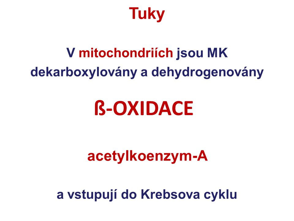ß-OXIDACE Tuky acetylkoenzym-A V mitochondriích jsou MK