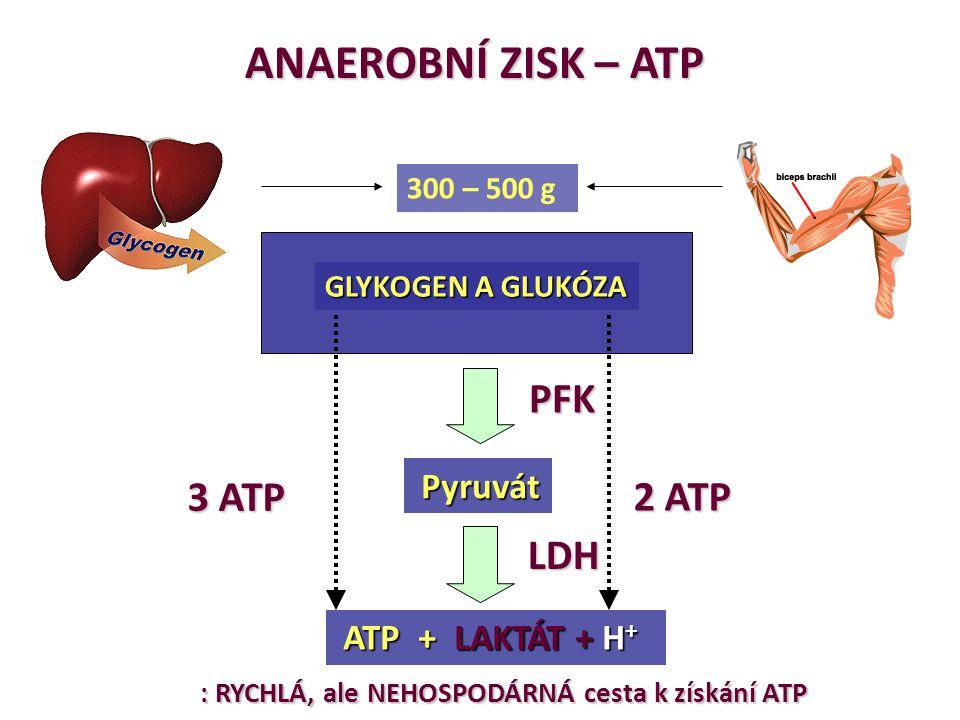 ANAEROBNÍ ZISK – ATP PFK 3 ATP 2 ATP LDH 300 – 500 g