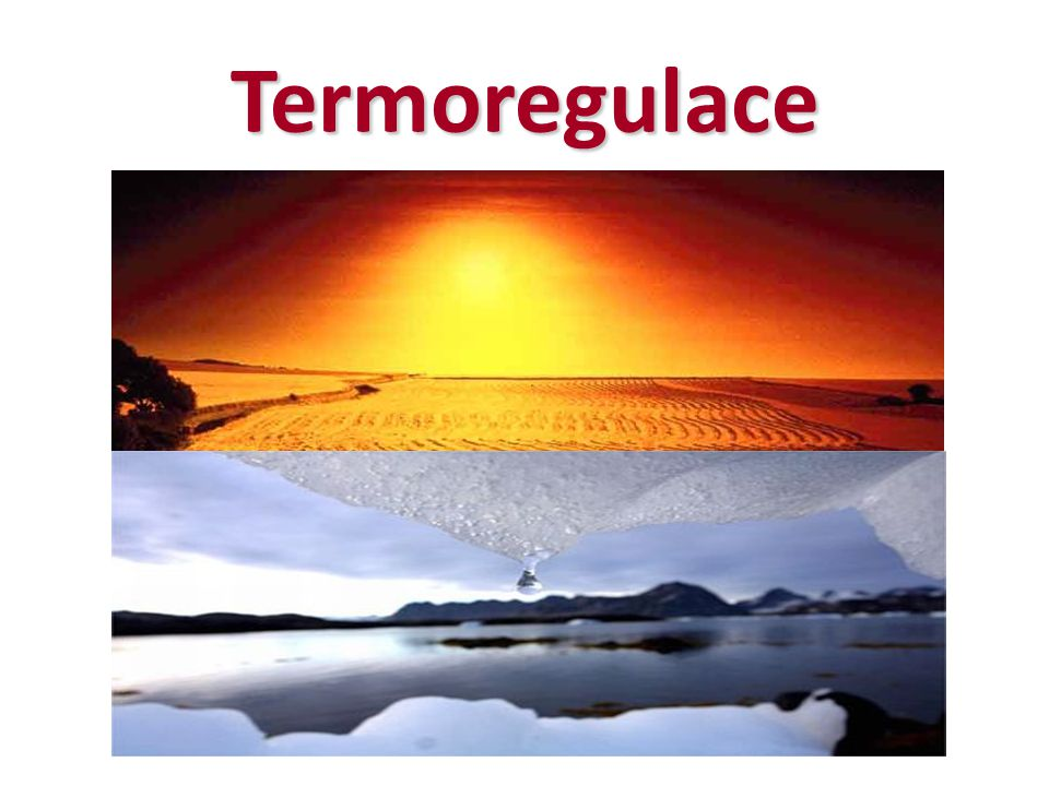 Termoregulace