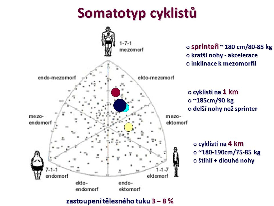 Somatotyp cyklistů sprinteři ~ 180 cm/80-85 kg