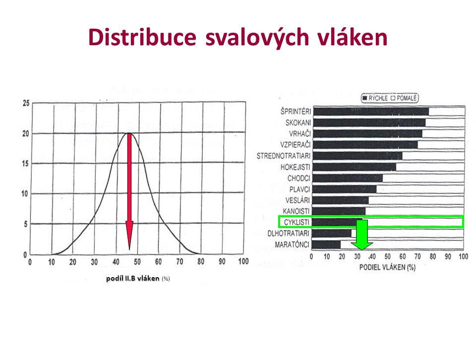 Distribuce svalových vláken