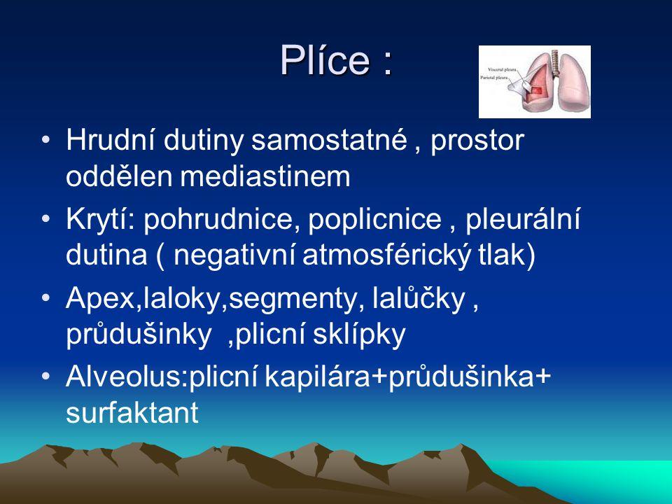 Plíce : Hrudní dutiny samostatné , prostor oddělen mediastinem