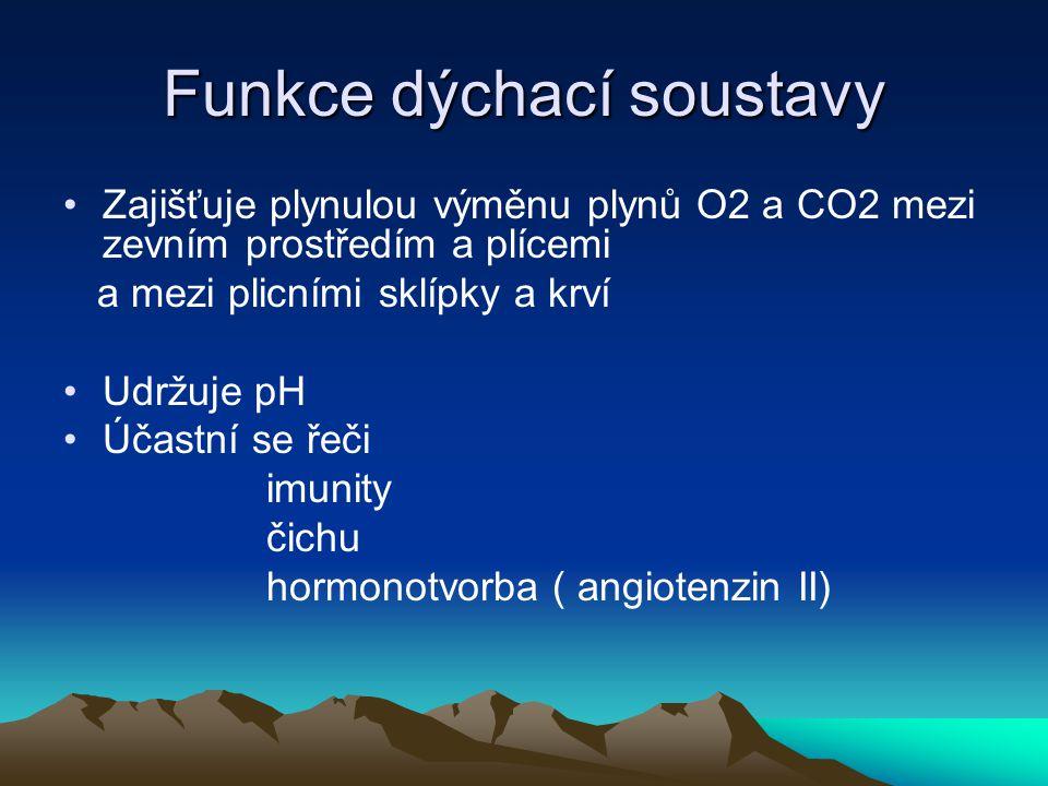 Funkce dýchací soustavy