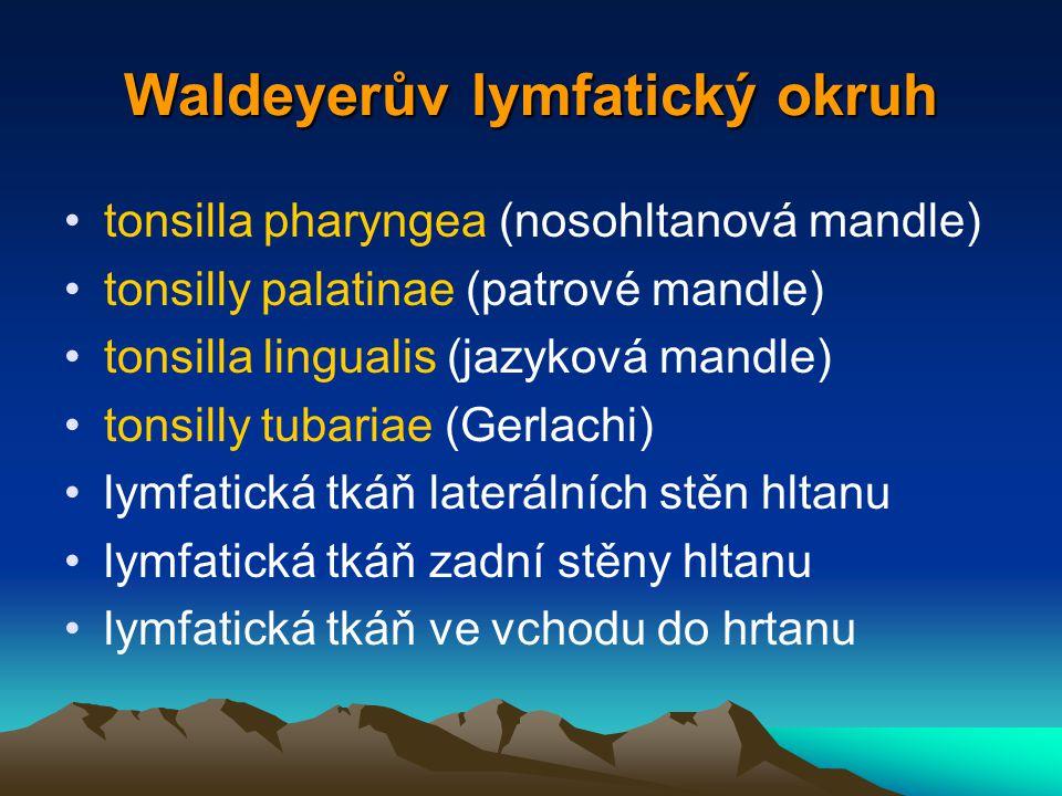 Waldeyerův lymfatický okruh
