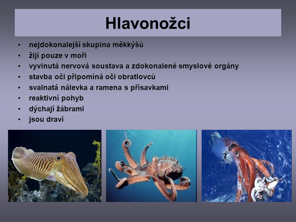 Hlavonožci nejdokonalejší skupina měkkýšů žijí pouze v moři