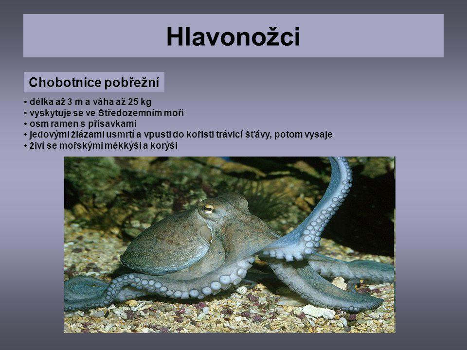 Hlavonožci Chobotnice pobřežní • délka až 3 m a váha až 25 kg