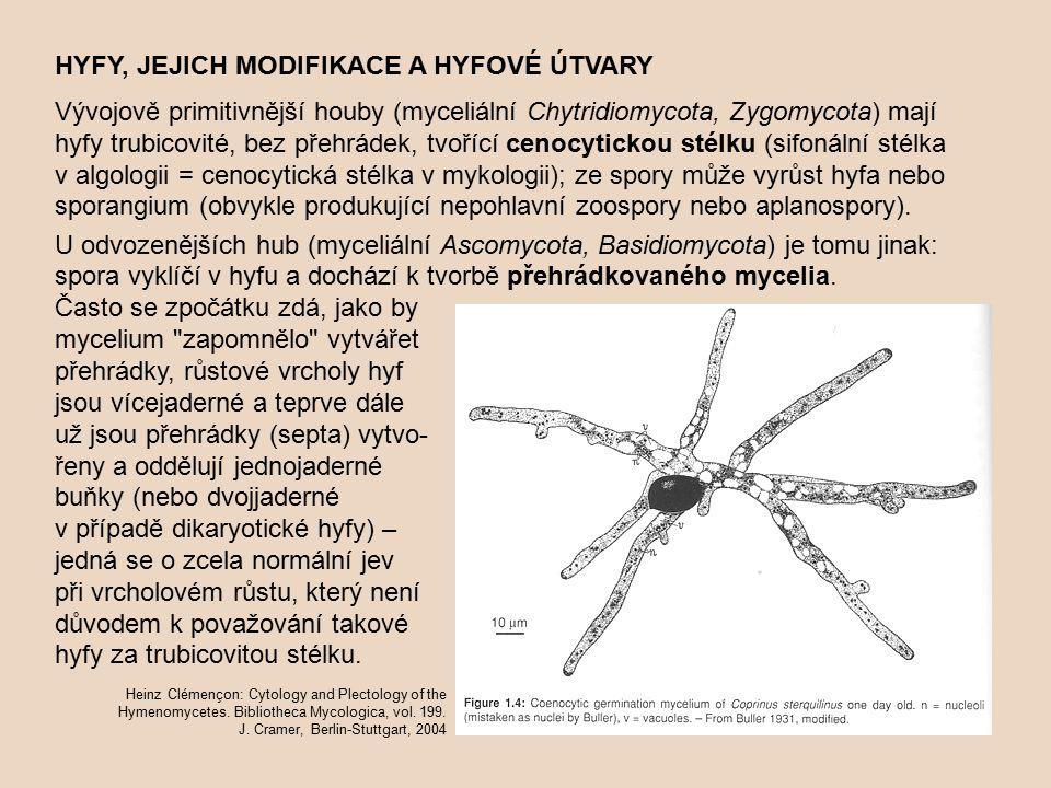 HYFY, JEJICH MODIFIKACE A HYFOVÉ ÚTVARY