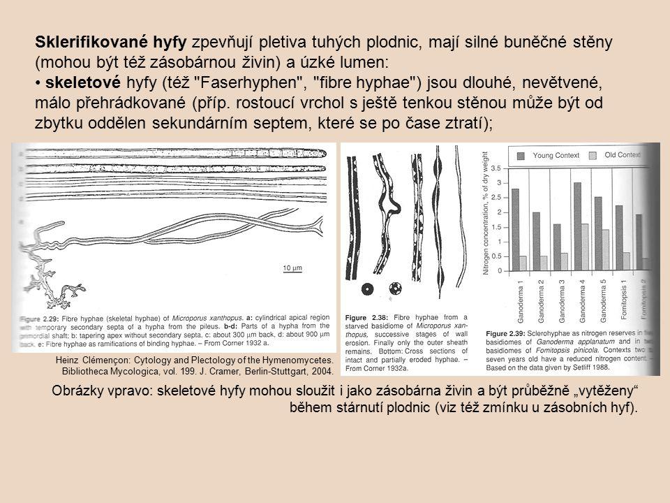 Sklerifikované hyfy zpevňují pletiva tuhých plodnic, mají silné buněčné stěny (mohou být též zásobárnou živin) a úzké lumen: • skeletové hyfy (též Faserhyphen , fibre hyphae ) jsou dlouhé, nevětvené, málo přehrádkované (příp. rostoucí vrchol s ještě tenkou stěnou může být od zbytku oddělen sekundárním septem, které se po čase ztratí);