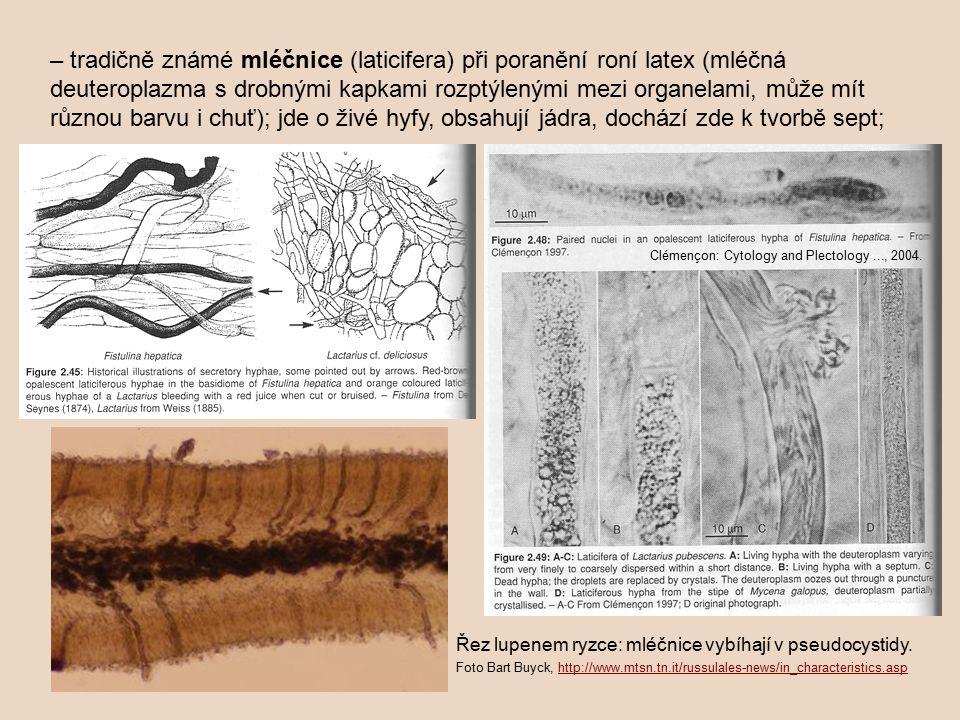 – tradičně známé mléčnice (laticifera) při poranění roní latex (mléčná deuteroplazma s drobnými kapkami rozptýlenými mezi organelami, může mít různou barvu i chuť); jde o živé hyfy, obsahují jádra, dochází zde k tvorbě sept;