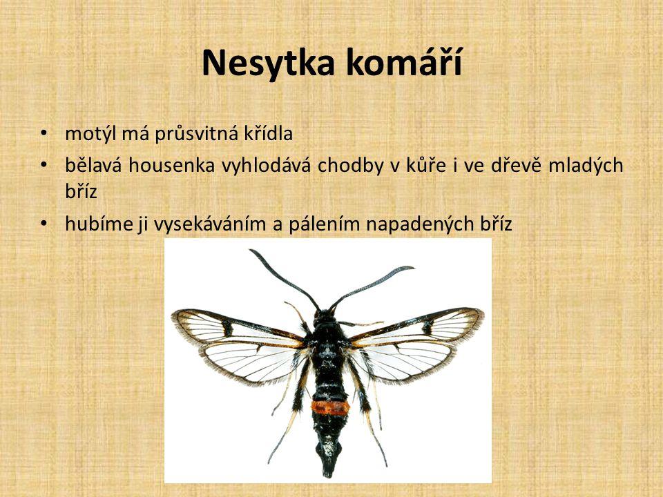 Nesytka komáří motýl má průsvitná křídla