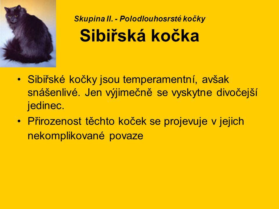Skupina II. - Polodlouhosrsté kočky Sibiřská kočka
