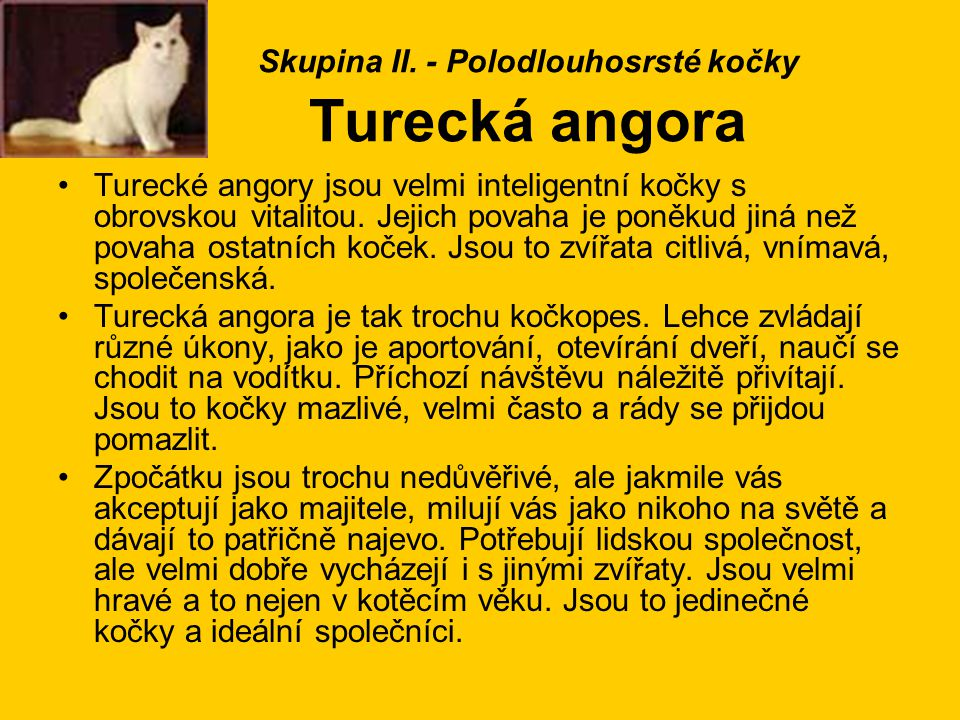 Skupina II. - Polodlouhosrsté kočky Turecká angora