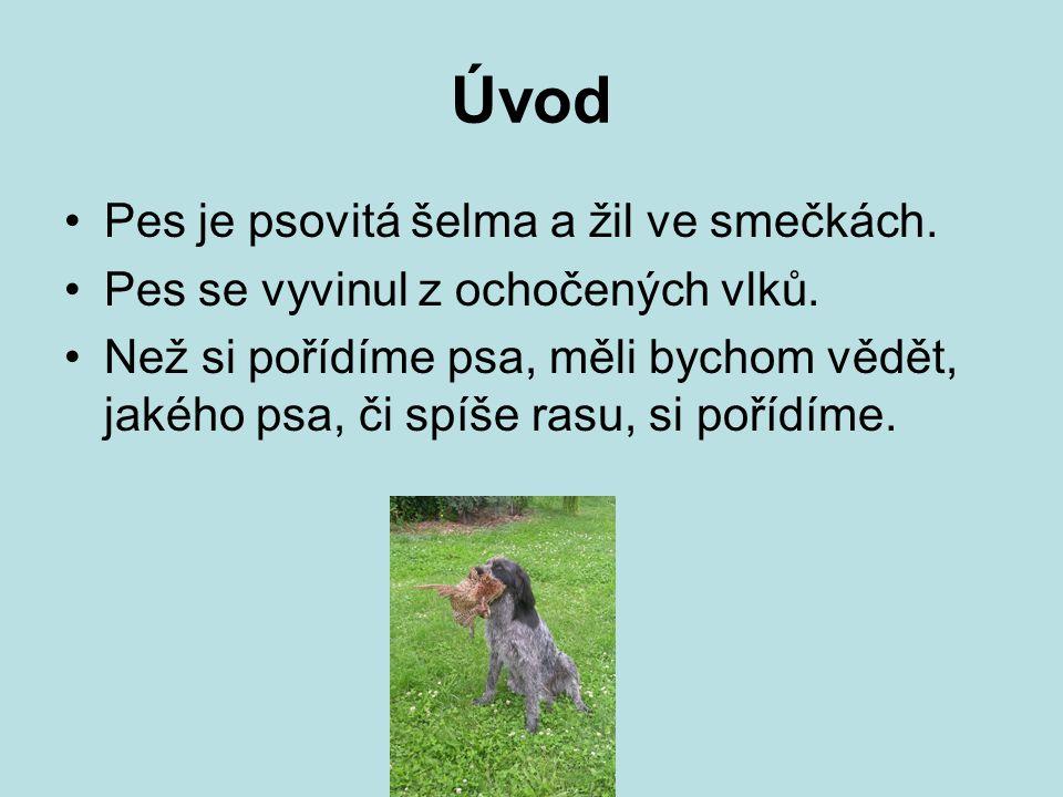 Úvod Pes je psovitá šelma a žil ve smečkách.