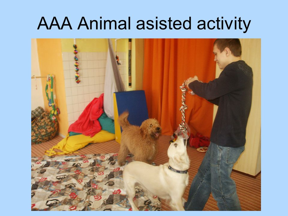 AAA Animal asisted activity
