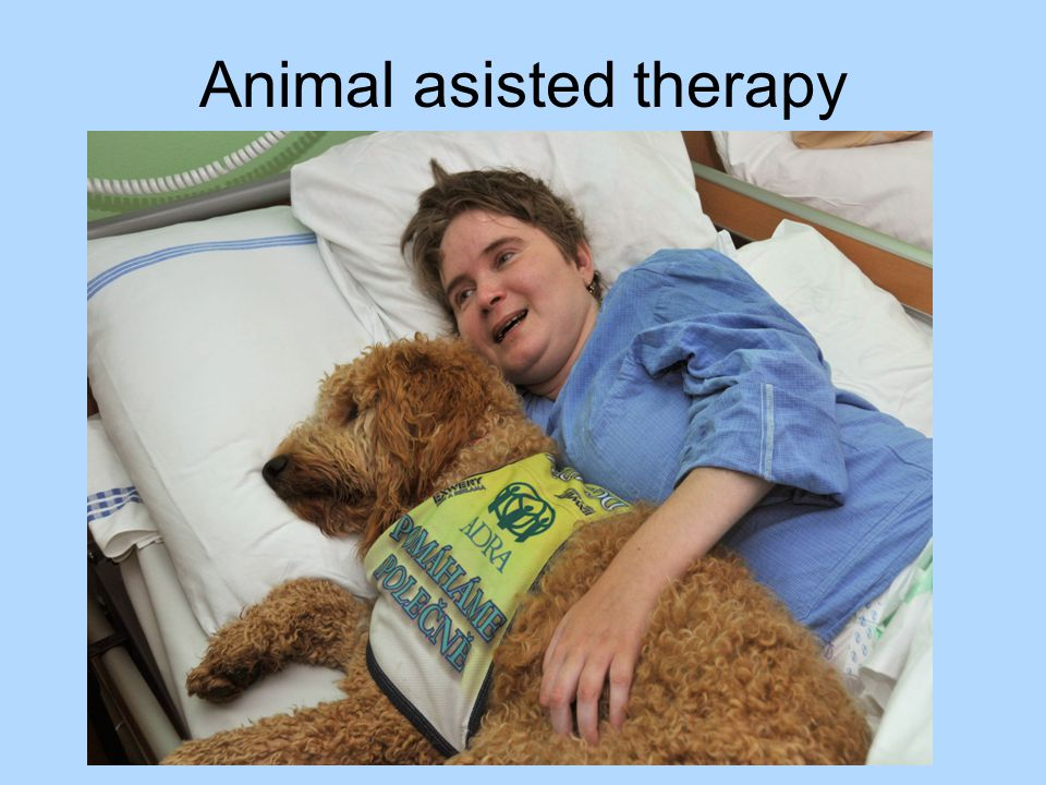 Animal asisted therapy