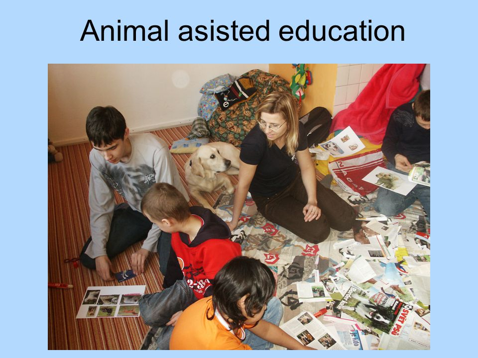 Animal asisted education