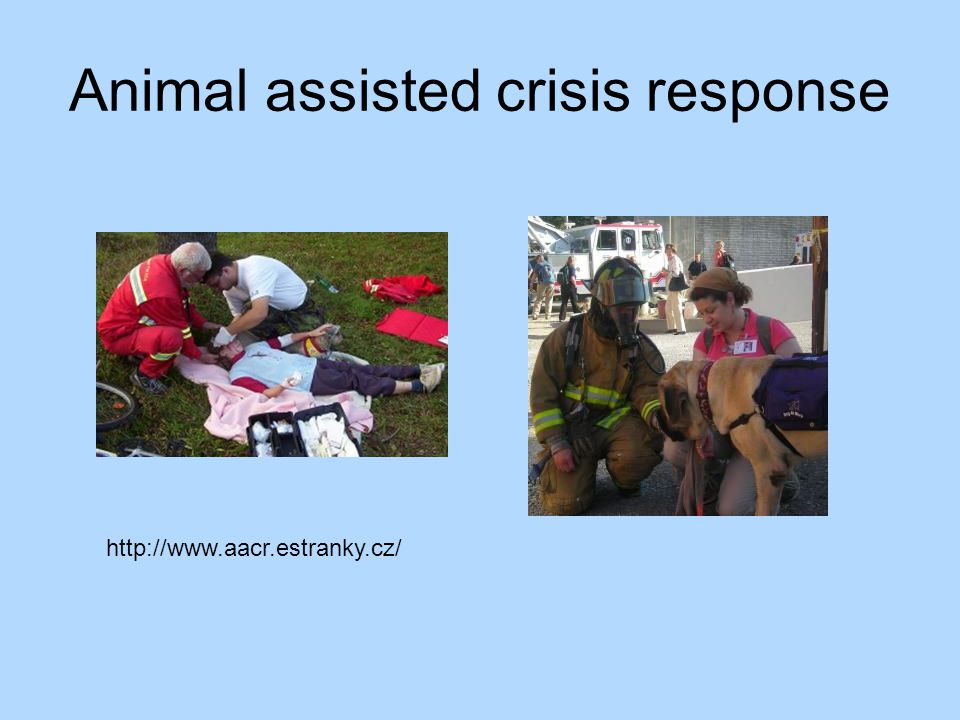 Animal assisted crisis response