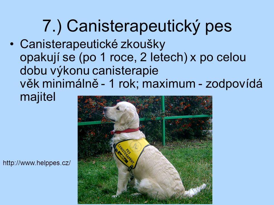 7.) Canisterapeutický pes