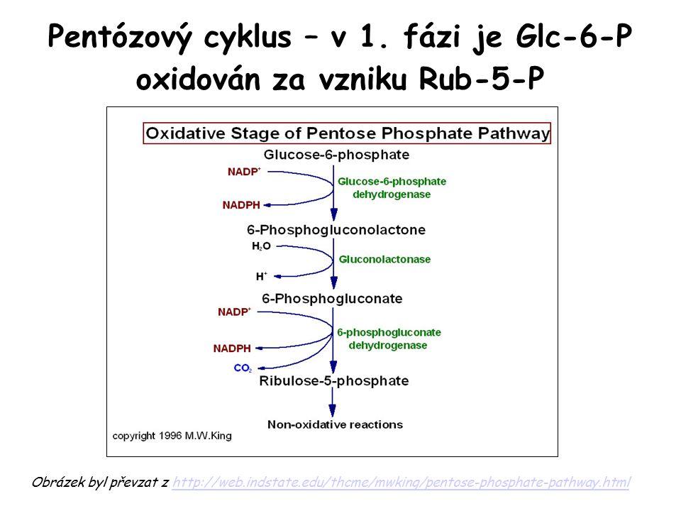 Pentózový cyklus – v 1. fázi je Glc-6-P oxidován za vzniku Rub-5-P