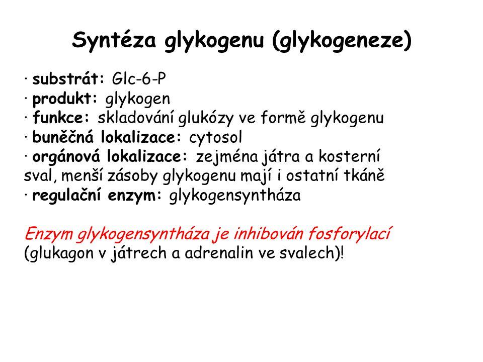 Syntéza glykogenu (glykogeneze)