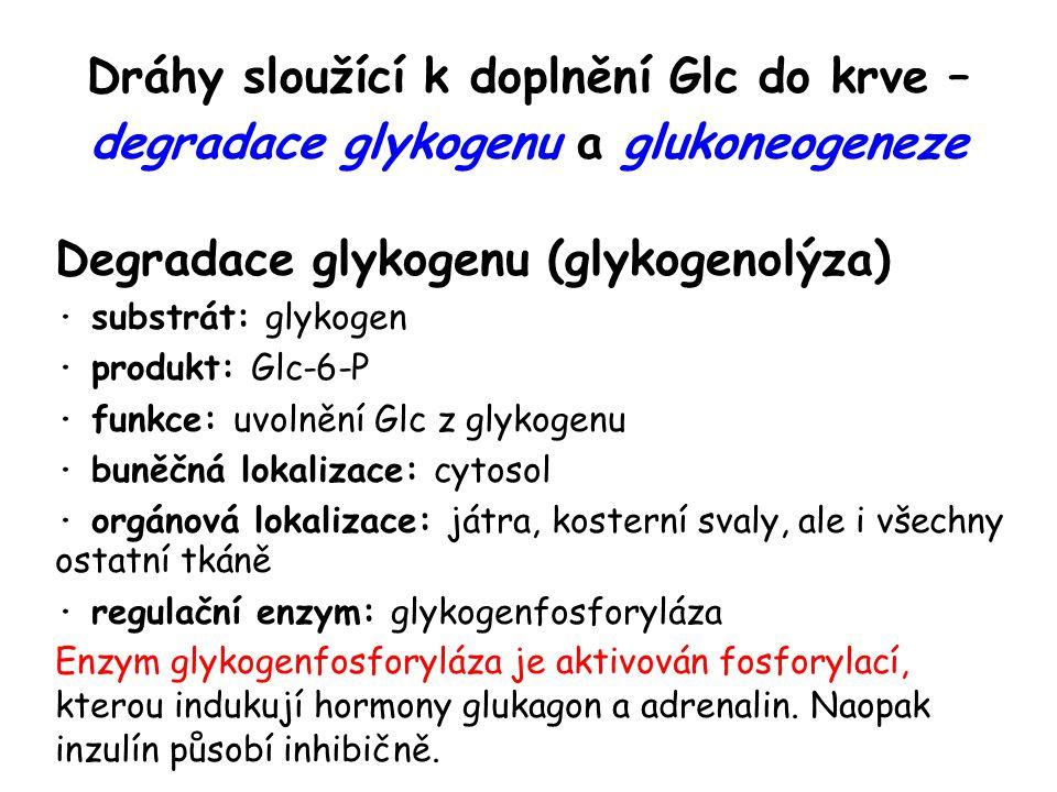 Degradace glykogenu (glykogenolýza)
