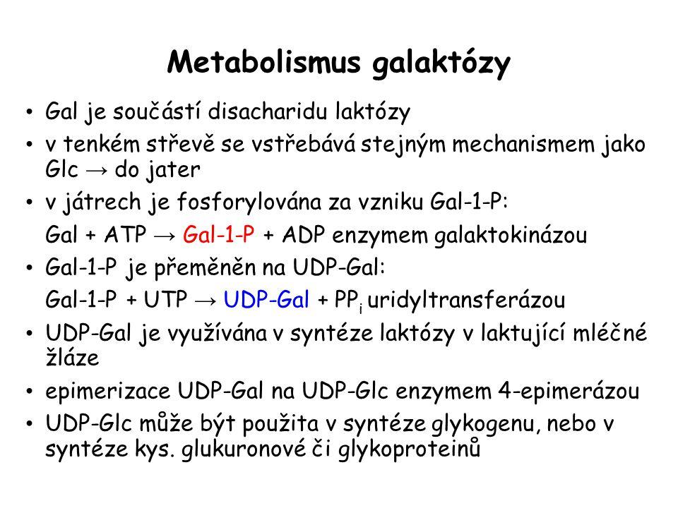 Metabolismus galaktózy
