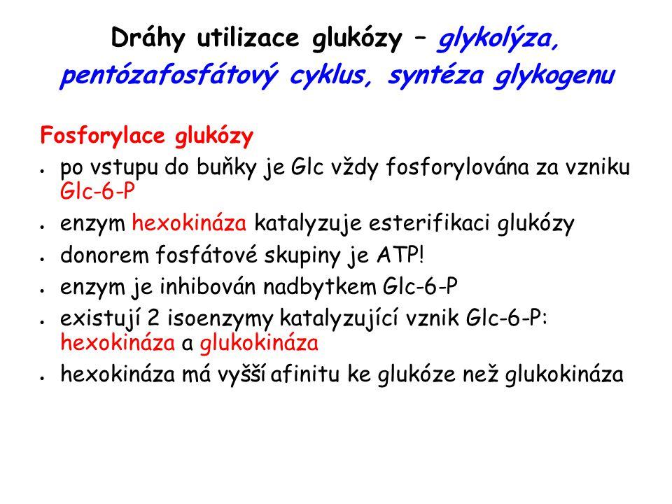 Dráhy utilizace glukózy – glykolýza, pentózafosfátový cyklus, syntéza glykogenu