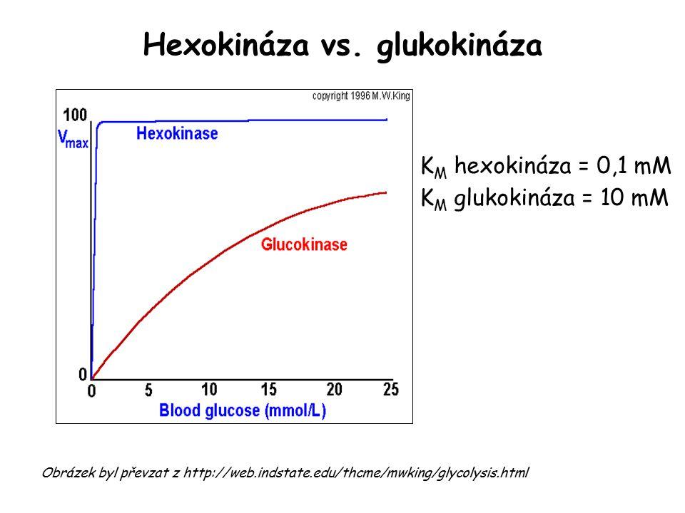 Hexokináza vs. glukokináza