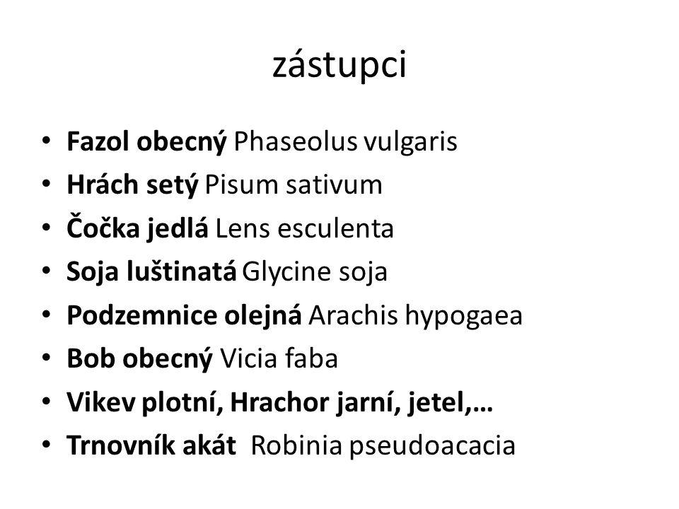 zástupci Fazol obecný Phaseolus vulgaris Hrách setý Pisum sativum