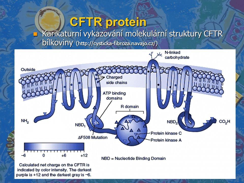 CFTR protein Karikaturní vykazování molekulární struktury CFTR bílkoviny (http://cysticka-fibroza.navajo.cz/)