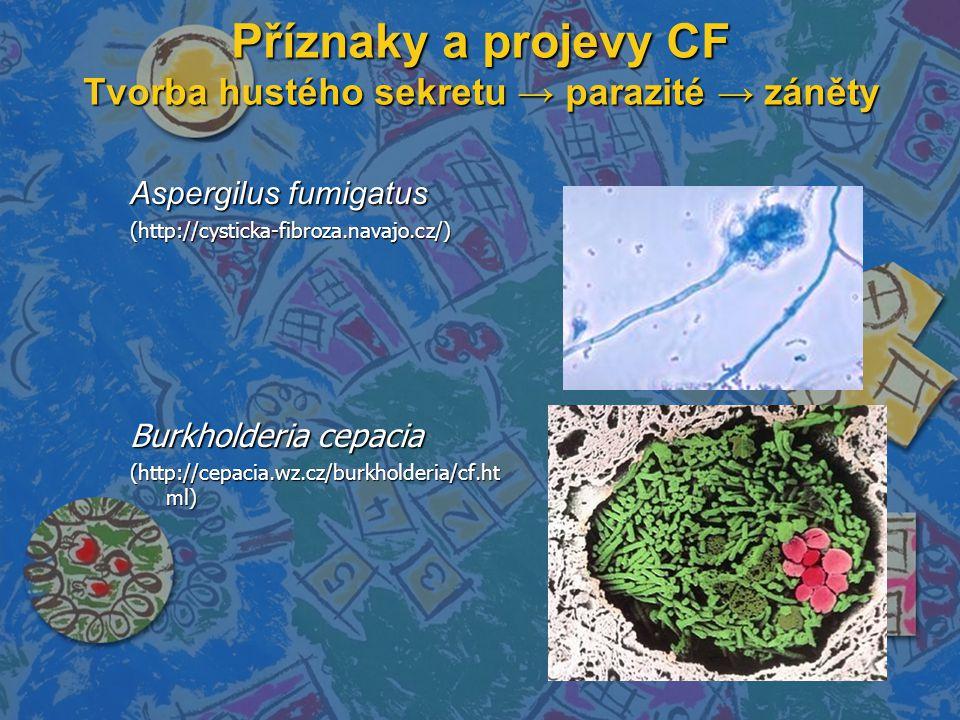 Příznaky a projevy CF Tvorba hustého sekretu → parazité → záněty