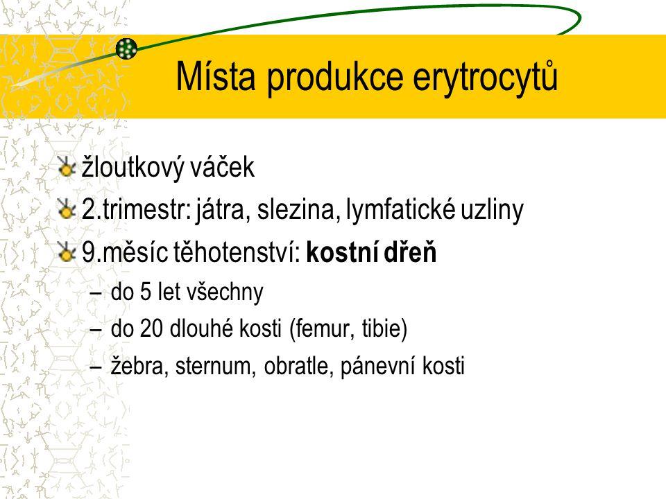 Místa produkce erytrocytů