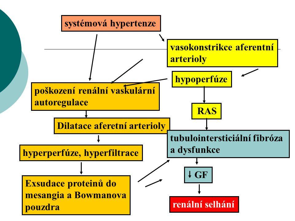 systémová hypertenze vasokonstrikce aferentní. arterioly. hypoperfúze. poškození renální vaskulární autoregulace.