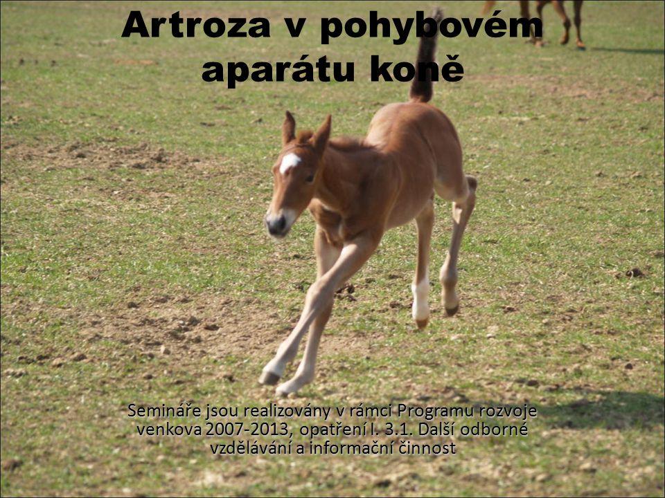 Artroza v pohybovém aparátu koně