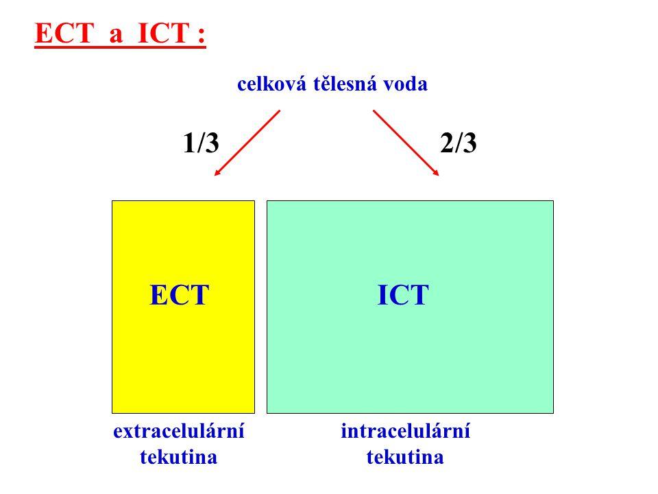 ECT a ICT : 1/3 2/3 ECT ICT celková tělesná voda extracelulární