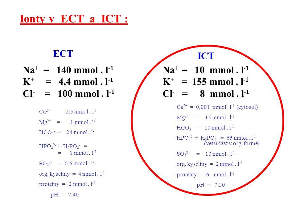 Ionty v ECT a ICT : ECT ICT Na+ = 140 mmol . l-1 K+ = 4,4 mmol . l-1
