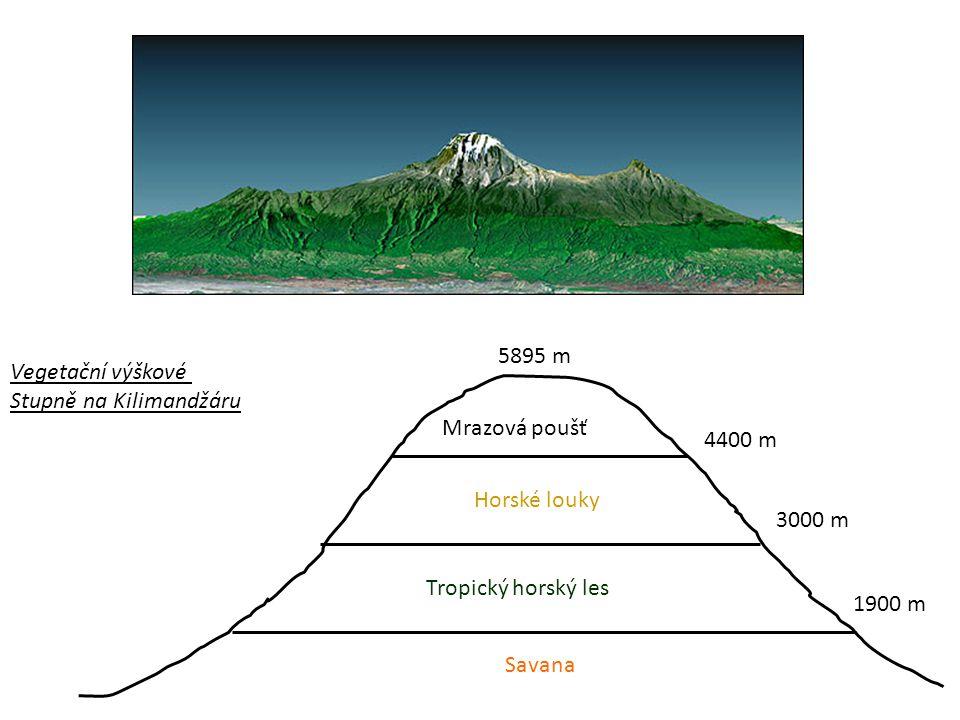 5895 m Vegetační výškové. Stupně na Kilimandžáru. Mrazová poušť. 4400 m. Horské louky. 3000 m.