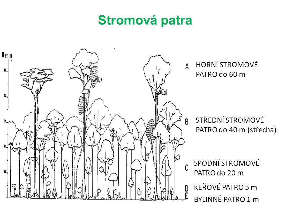 Stromová patra HORNÍ STROMOVÉ PATRO do 60 m STŘEDNÍ STROMOVÉ