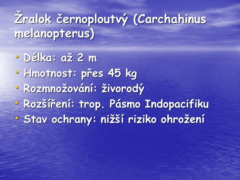 Žralok černoploutvý (Carchahinus melanopterus)