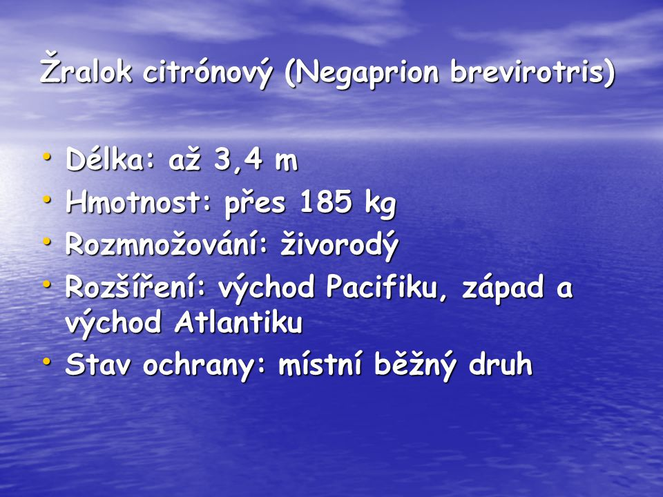 Žralok citrónový (Negaprion brevirotris)