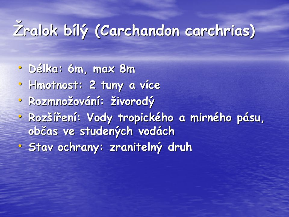 Žralok bílý (Carchandon carchrias)