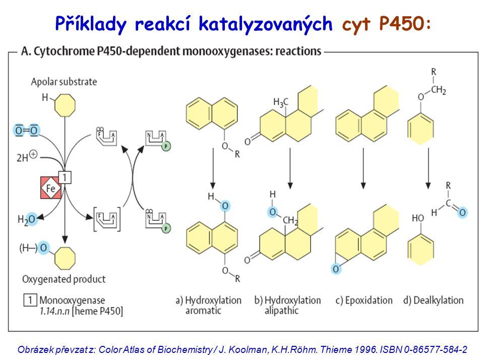 Příklady reakcí katalyzovaných cyt P450: