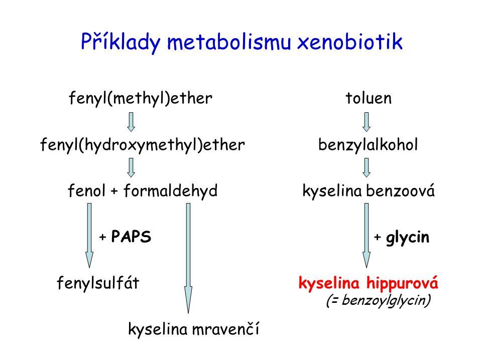 Příklady metabolismu xenobiotik
