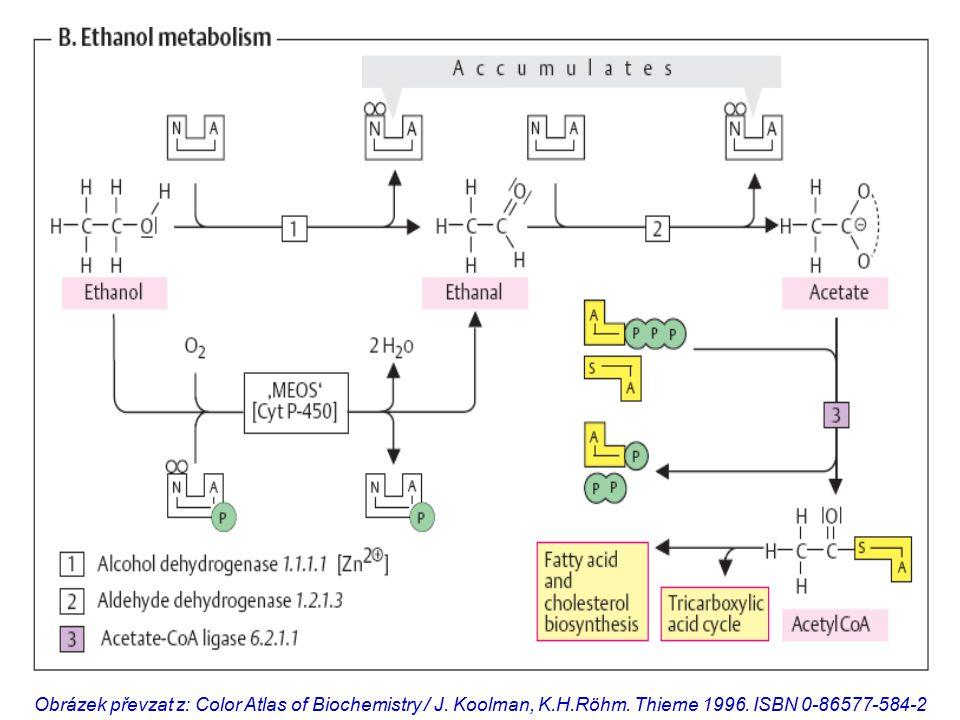 Obrázek převzat z: Color Atlas of Biochemistry / J.