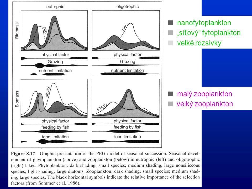 """ nanofytoplankton  """"síťový fytoplankton  velké rozsivky  malý zooplankton  velký zooplankton"""