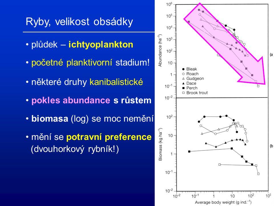 Ryby, velikost obsádky plůdek – ichtyoplankton