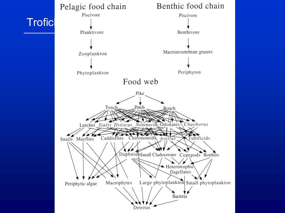 Trofické hladiny, potravní sítě