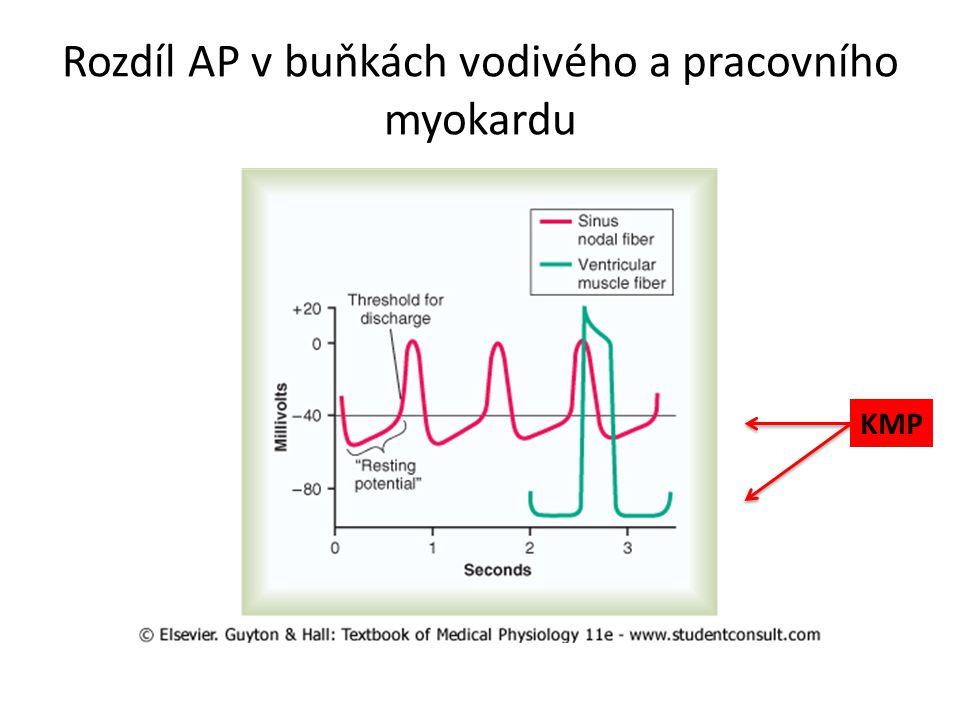 Rozdíl AP v buňkách vodivého a pracovního myokardu